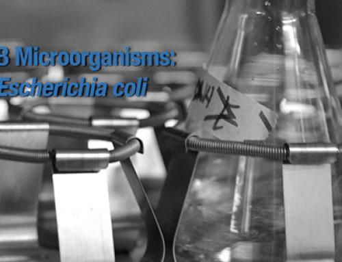 R4B microorganisms: Escherichia coli