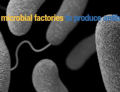 TOPCAPI: microbial factories to produce antibiotics